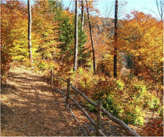 White Mountains New Hampshire Fall Foliage.png
