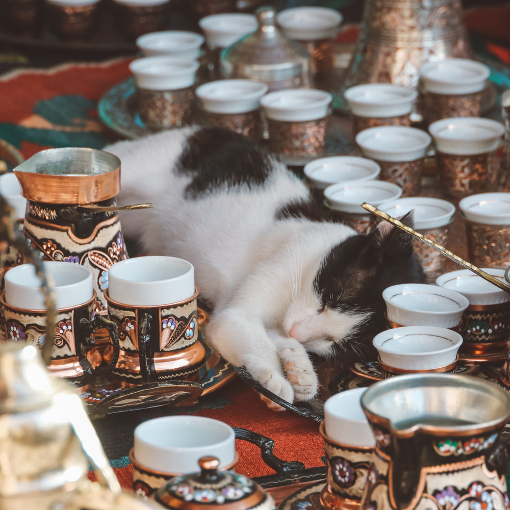 Cat Nap in Old Town, Mostar