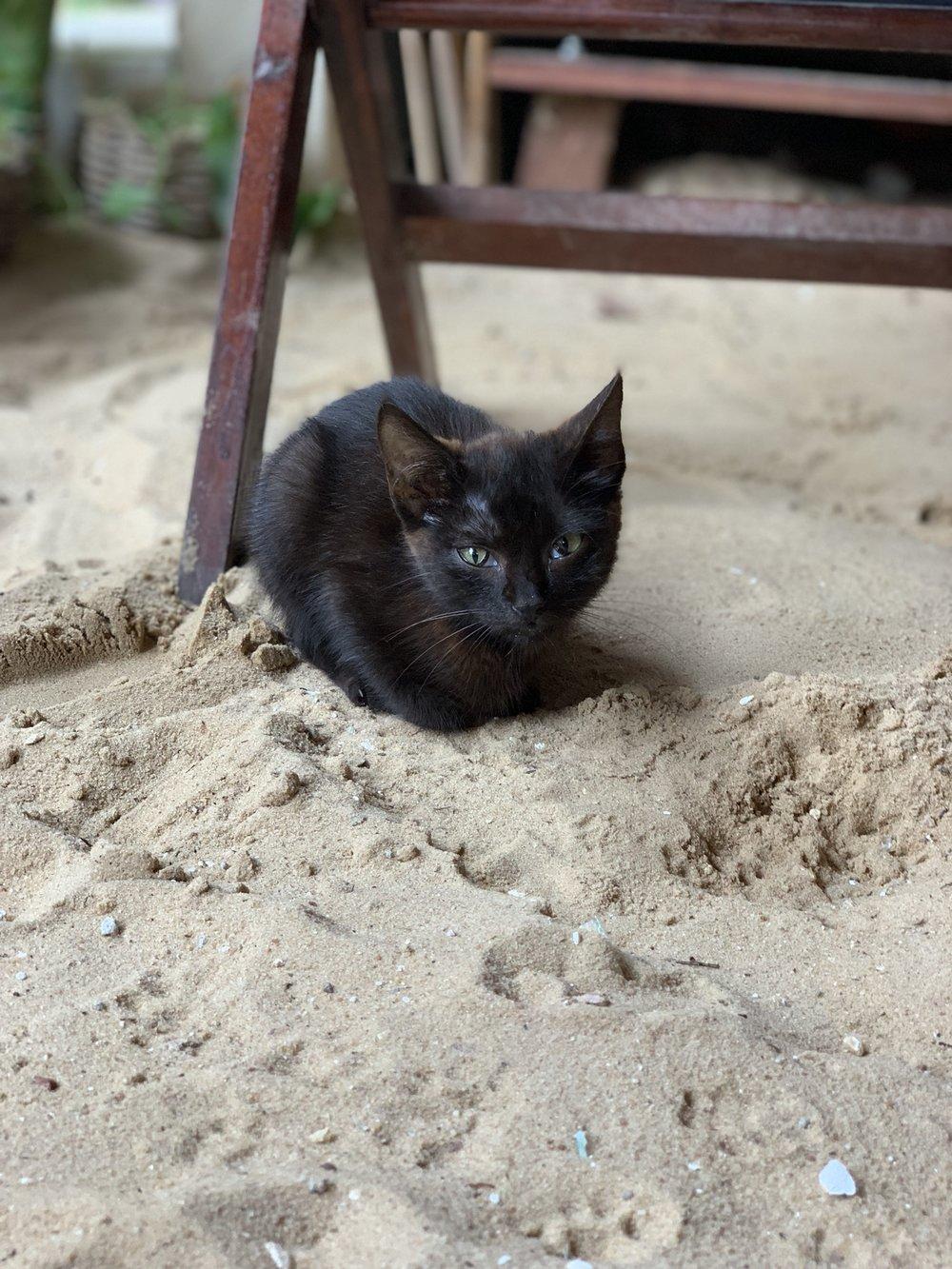 jeri kitten.jpeg