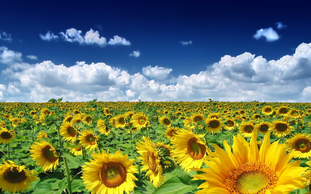 flowers10.jpg