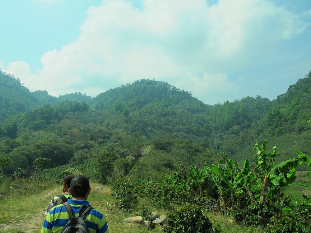 Montaña de agua dulce. En otro lado de la montaña están las tomas de Chaguites, 3 Paso Uno, y Las Casitas.