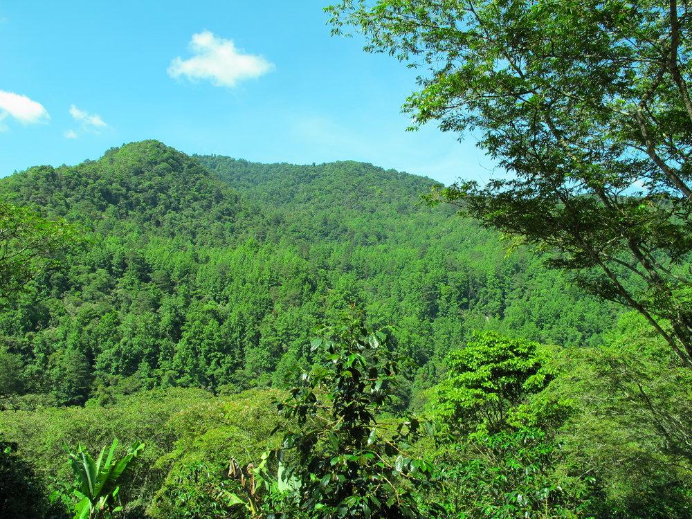 El bosque que está bien protegido de la cuenca