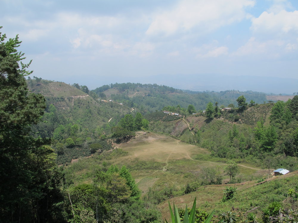 Deforestación y contaminación de cultivos arriba de la toma de Campesinos Unidos, Brisas del Campo y Agua de Siguatepeque