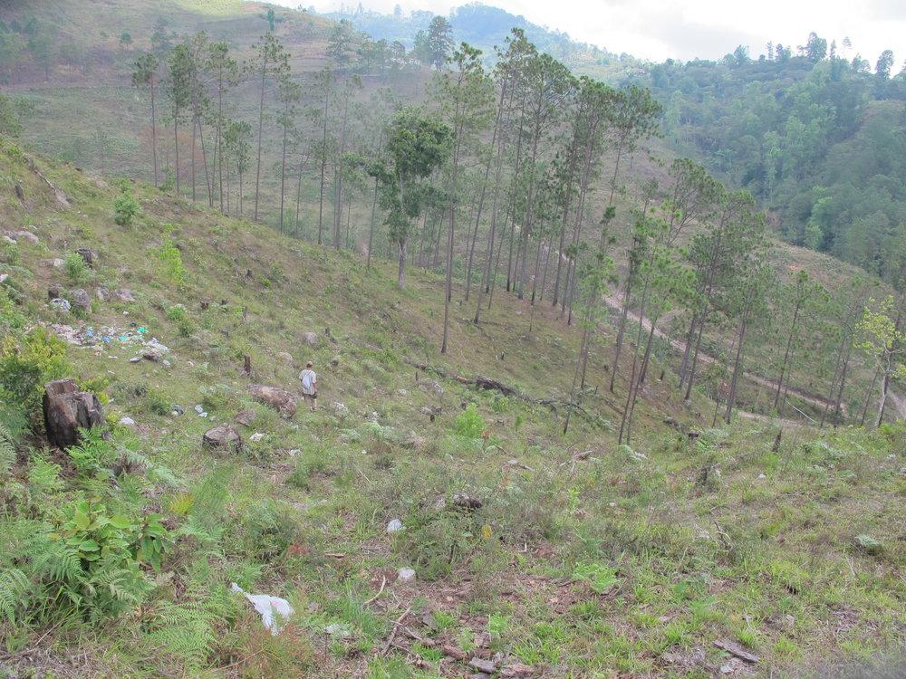 Deforestación y daño de gorgojo arriba de la toma de Brisas del Bosque