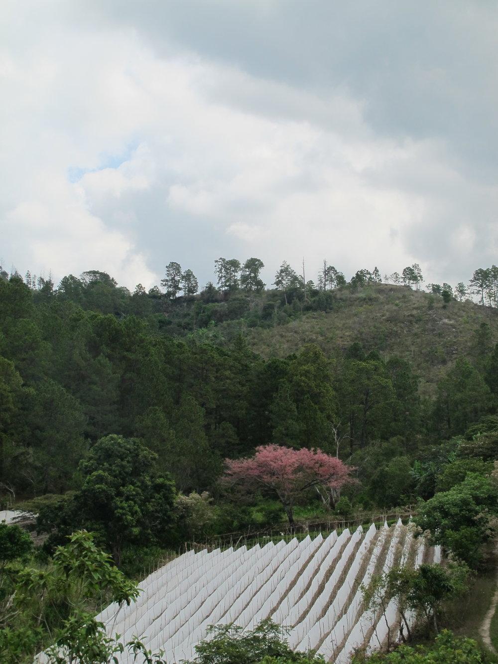 Deforestación arriba de la toma con un cultivo de tomate abajo