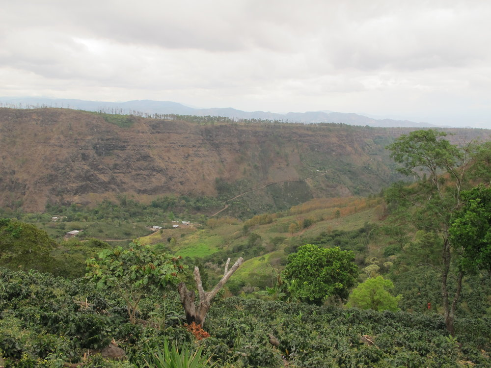 Un ejemplo de deforestación de más de 25 manzanas este año en la corrdiera de las montecillos para sembrar más café.