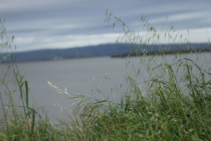 shoreline 4.jpg