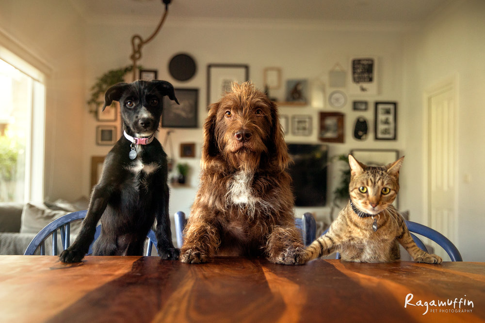 trio-at-the-table-web.jpg