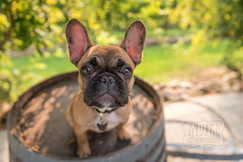 Indigo-Pet-Photography-Ruby-022.jpg