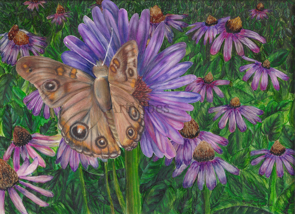 Animal Brown Butterfly WAM.jpg