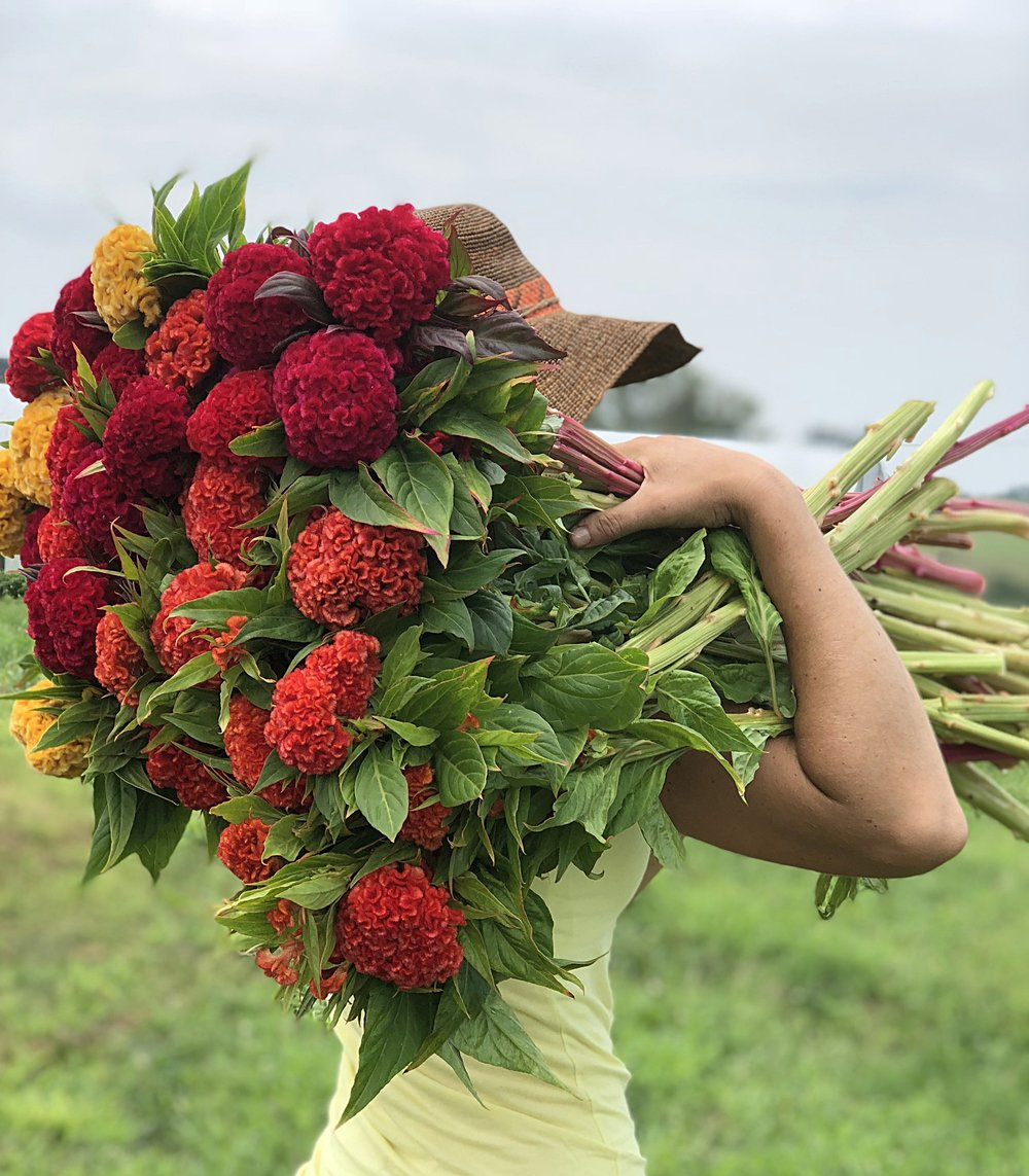 The story behind our flowers - Read about what led to the creation of Periwinkle Flower Farm & how choosing locally grown flowers makes your world a lovelier place.