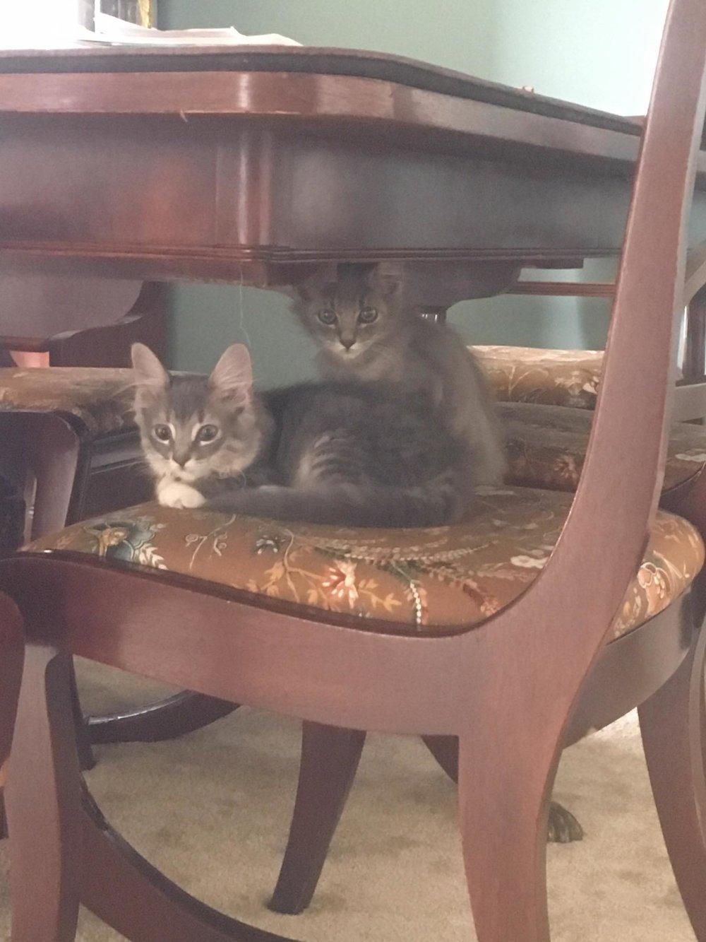 the royal pair... - on a royal chair