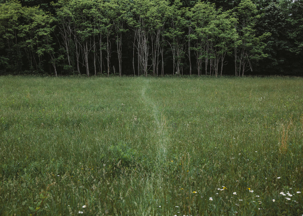 Kristian Thacker . June 1, 2015. The faint trail of a deer that had been feeding in this field earlier in the morning. Fort Hill, Somerset County, Pennsylvania.