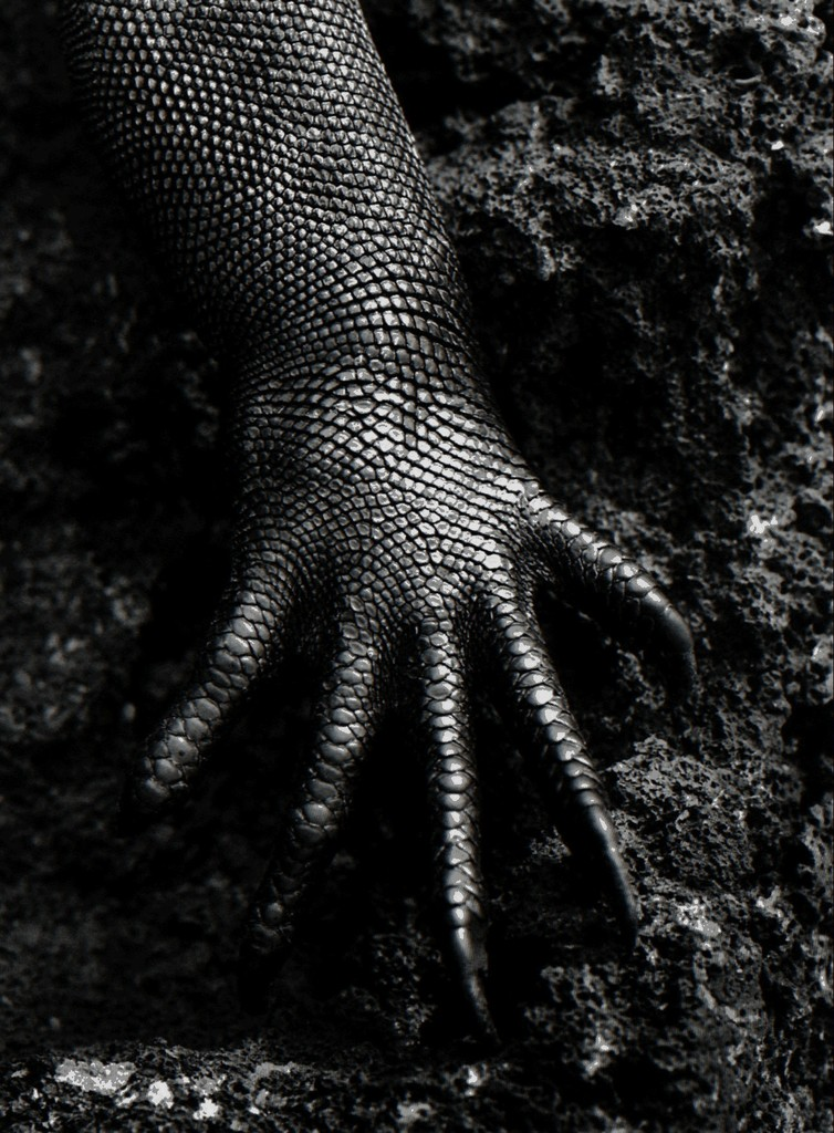 reptile hand our family species