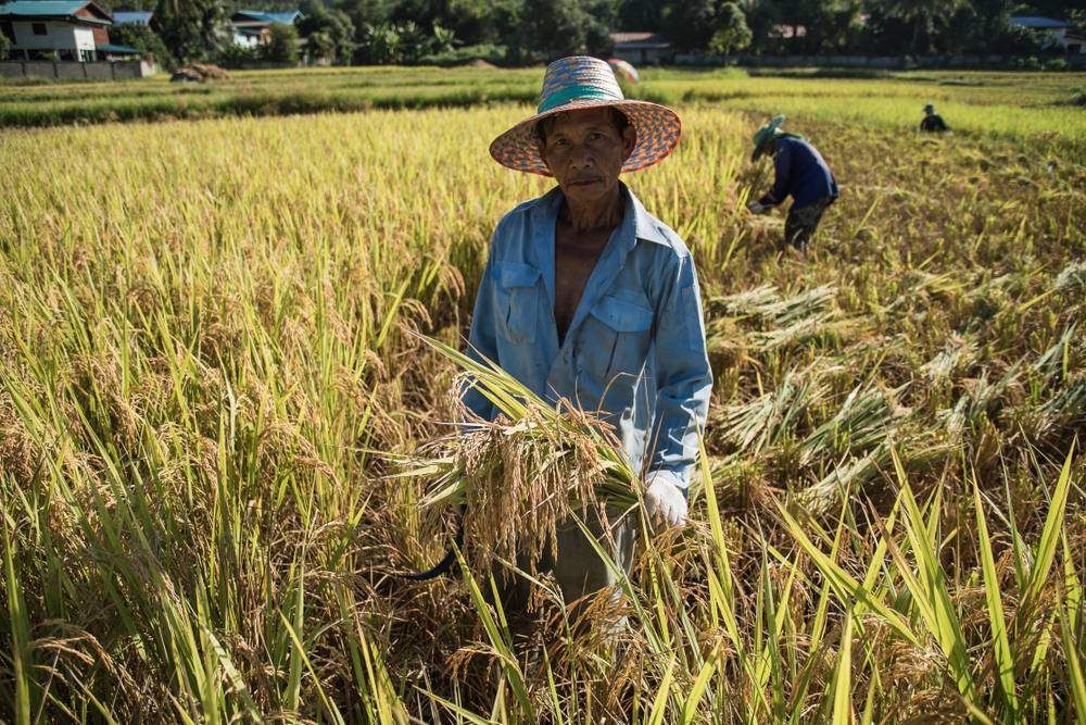 A farmer in Thailand, which has historically failed to implement effective land reform