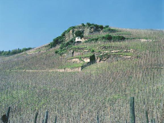 The Wehlener Sonnenuhr vineyard, with its sundial just below the summit