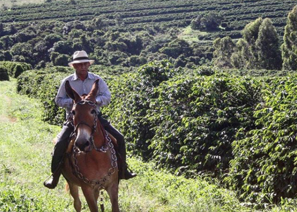 FAZENDA MIRANTE - Named because of the beautiful view from the gate of the farm, this is a