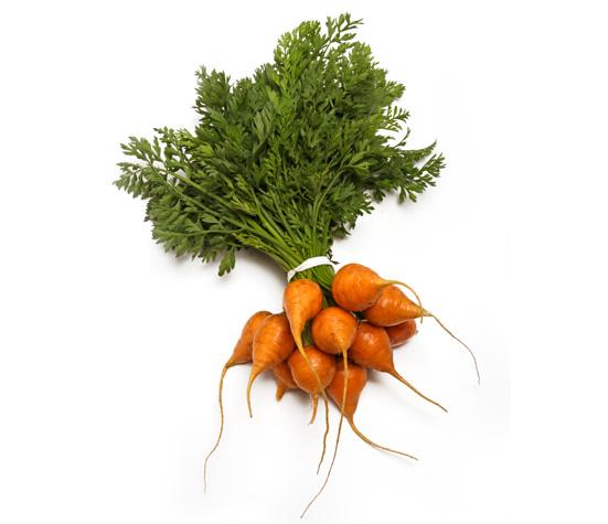 baby-round-carrots.jpg