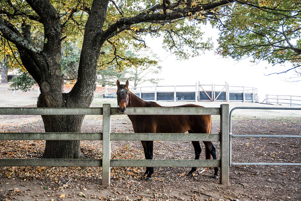 rural luxury farm stay experience in braidwood nsw