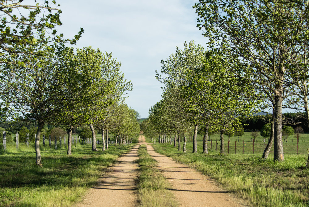 Country roads lined with trees at Mona Farm