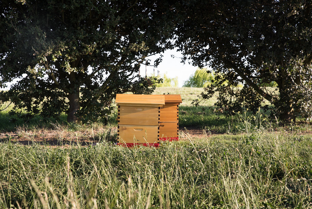 Beehives in tribute to Thomas Braidwood Wilson's introduction of honey bees to Australia
