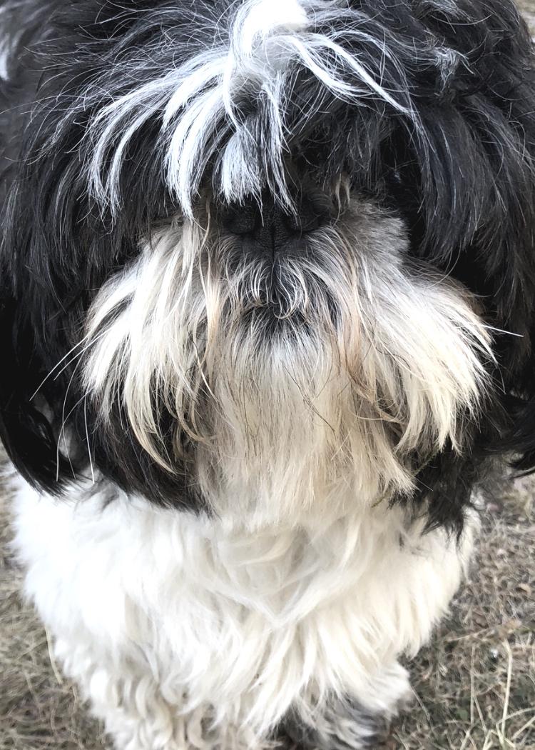MUSSE - Kontorshunden, glad, trevlig och utåtriktad       (utan stamtavla vilket vi ser som ett plus)