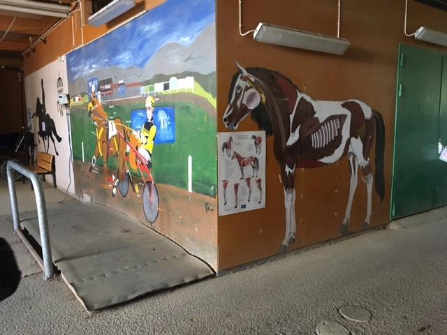 anatomi häst wången.jpg