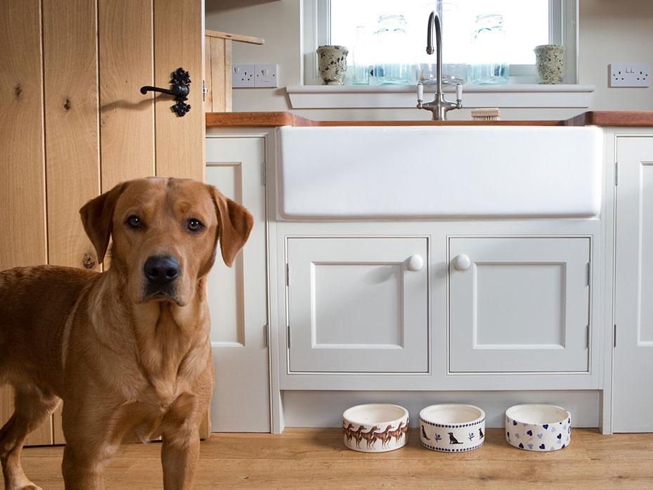 dog-utility-room.jpg