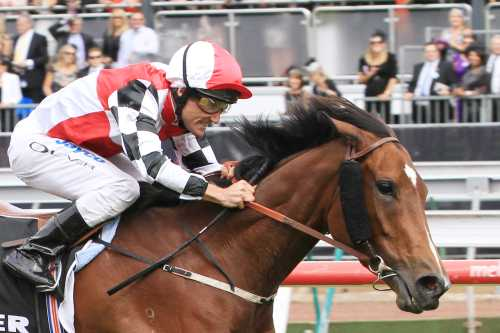 Hurtle Myrtle with Damien Oliver wins 2011 Myer Classic