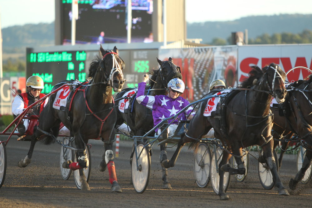 """Image Courtesy of National Trotguide - """"Mat Rue wins the 2013 Miracle Mile on Baby Bling""""."""