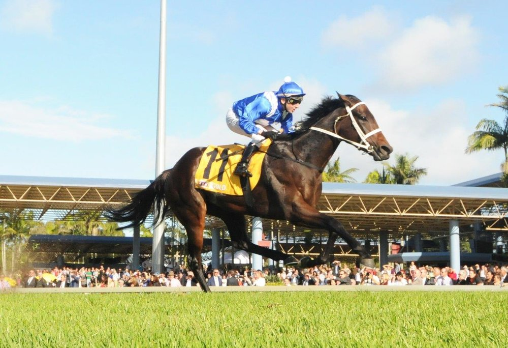Image Courtesy of Trackside Photography - Larry Cassidy wins Sunshine Coast Guineas on Winx 2015