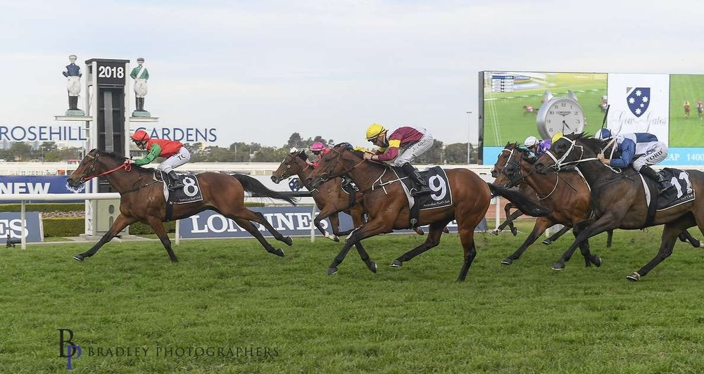 Image Courtesy of Bradley Photos - Tip Top wins again Rosehill September 22