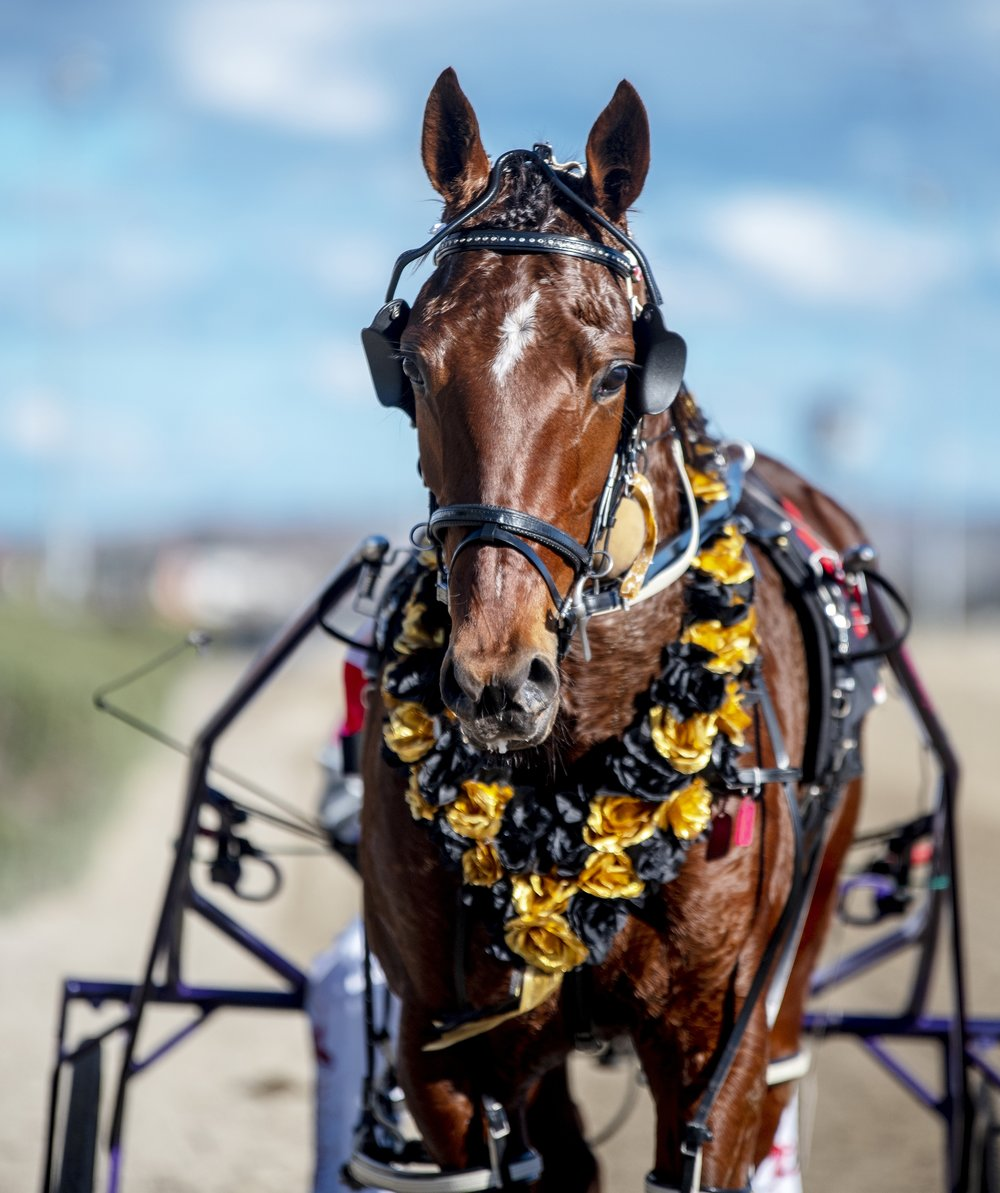 Image Courtesy of National Trotguide - Goodtime Heaven Winners are Grinners