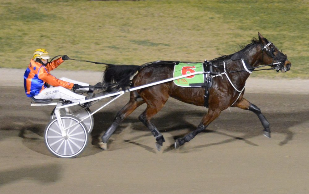Image courtesy of Harness Racing NSW - Another Rando trot winner - Rompers Monarchy