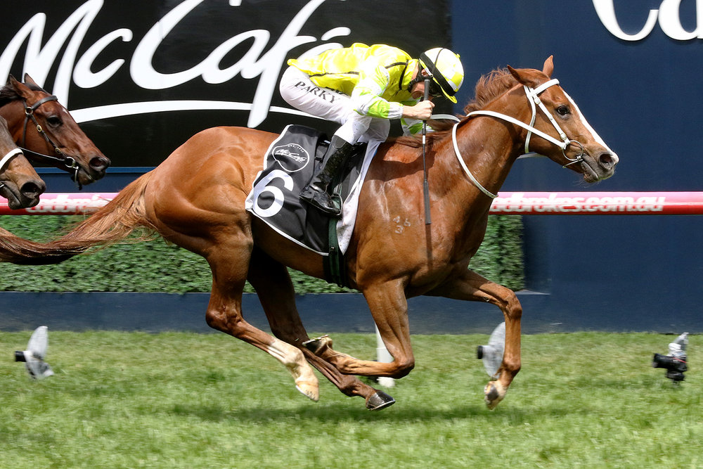 Image courtesy Darryl Sherer - Eduardo and Brian Park are 'Airborne' in the Caulfield Sprint.
