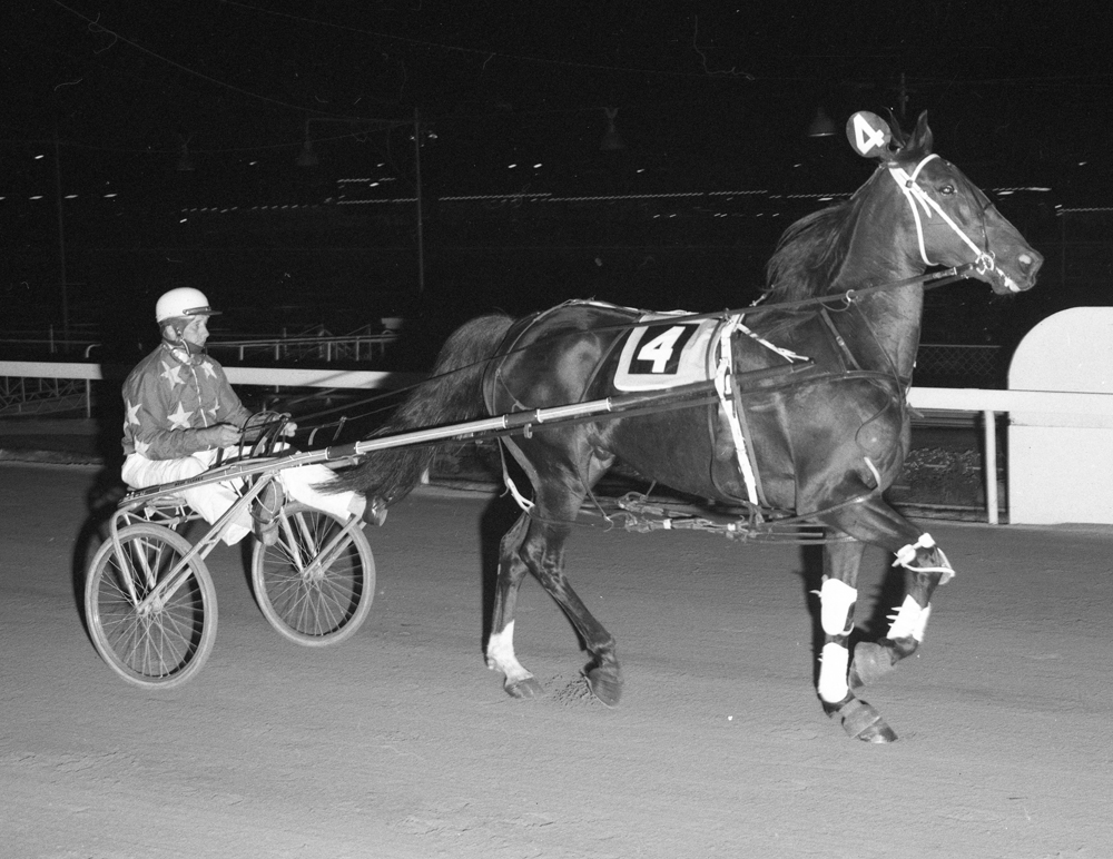 Image courtesy National Trotguide - Bold David winner of 41 races. One of the best of his generation.