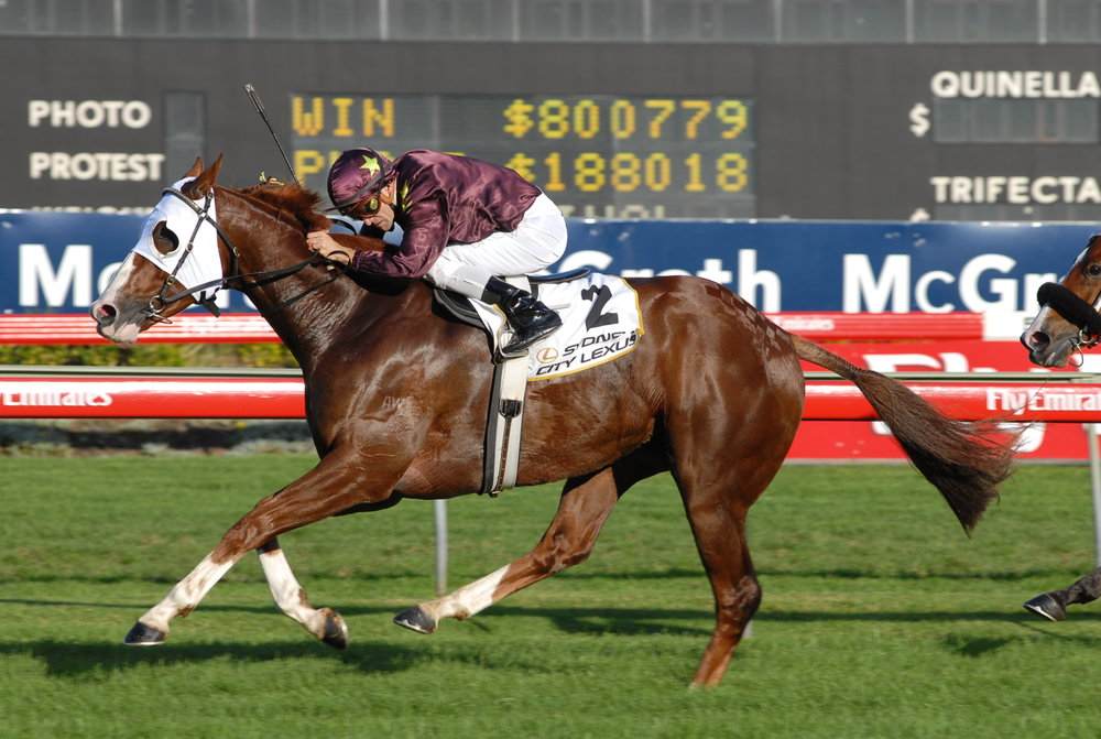 Image courtesy Steve Hart Photographics - One of Apache Cat's 8 Group One wins - the 2008 T.J. Smith at Randwick.