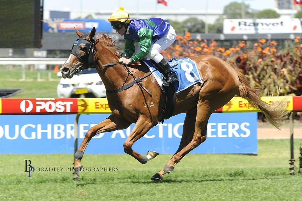 Image courtesy Bradley Photographers - John won the 2011 Inglis Classic with Pane In The Glass during the Tinkler era.