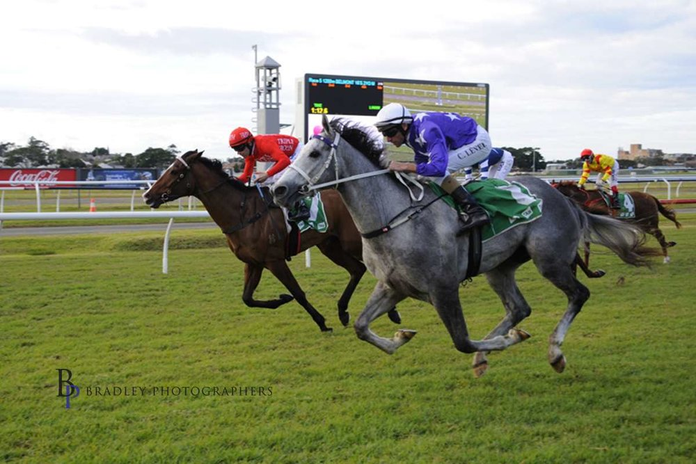 Image courtesy Bradley Photographers - Chad gets D'argento's career started in a 2yo maiden at Newcastle.