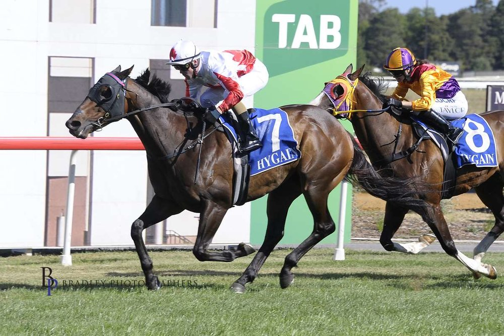 Image courtesy Bradley Photographers - Lucky Prospector wins at Canberra for the Burleigh stable 22/2/2019.