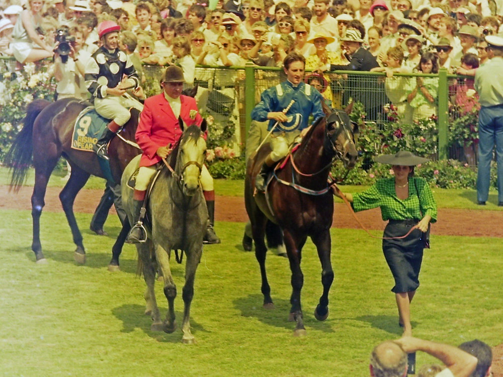 Image courtesy Steve Hart Photographics - At Talaq returns to scale after the 1986 Melbourne Cup.