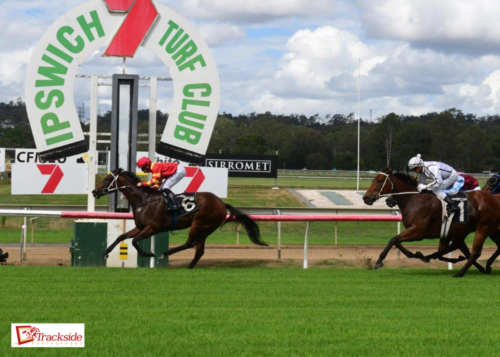 Image courtesy Trackside Photography - Dynamisante from the Kemp stable wins recently at Ipswich.