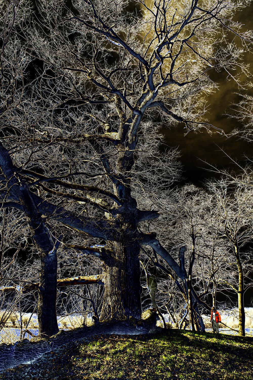 GODsDOGs , HillTree,  2018, 270 x 180,2 cm, Velum-Tex Samba Backlight, Leuchtstoffröhren, Holz, Karton