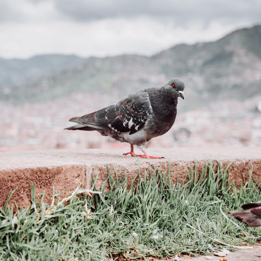Peru-25.JPG