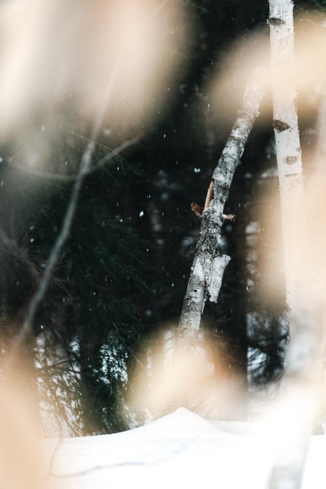 Winter of Québec - Anthony Ledoux - Photographer and Filmmaker - Photographe6.jpg