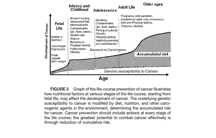 Figure 2. Uauy R, Solomons N. (2005). Diet, nutrition, and the life-course approach to cancer prevention.  J. Nutr. , 135(12 Suppl), 2934S-2945S.