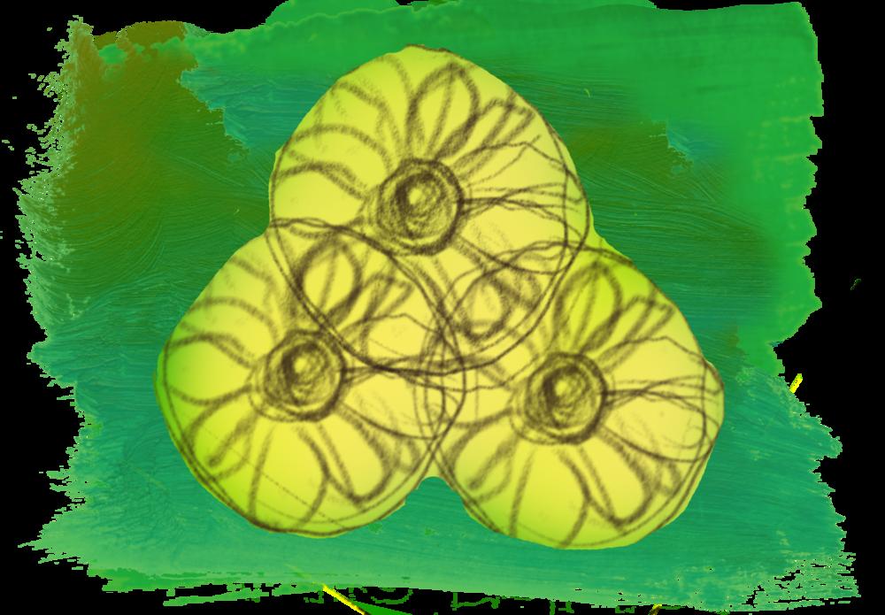 flowersbutton.png