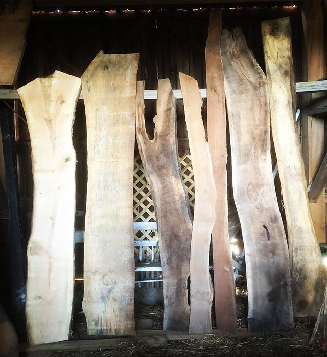 Schedule a time to come check out our 'showroom' (aka the barn)! contact info on our page * * * #liveedgewood #liveedge #diy #buylocal #localwood #rva #makersgonnamake #woodworking #farmhouse #woodslab #hardwood #woodtable #woodbench #woodmizer #housegoals #sustainableliving #smallbusiness #sawmillbusiness