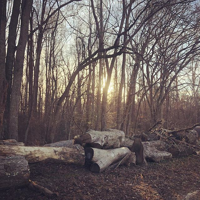 Logs laid in wait. We'll see what beauty lies inside these future slabs!