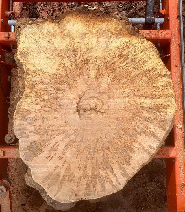 "Calling all cookie monsters! This spalted beauty measures in at 30"" x 40"" and 3.5"" thick. * * * #localwood #localcookies #liveedgewood #liveedgetable #diy #buylocal #rva #makersgonnamake #woodworking #woodtable #cookietable #hardwood #woodstool #woodmizer #housegoals #spaltedwood"